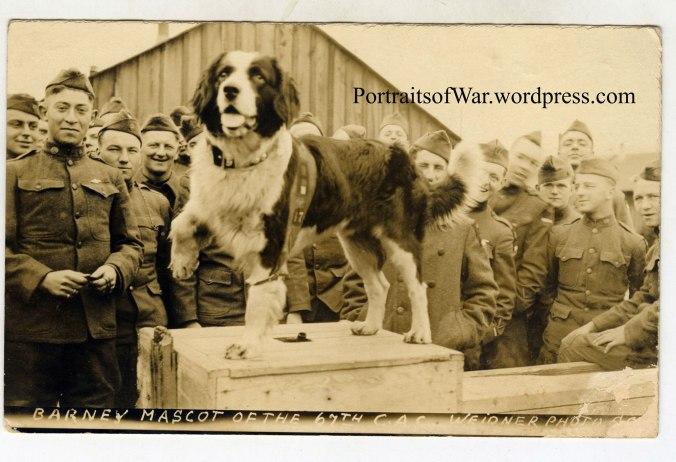 Barney the St. Bernard in WWI